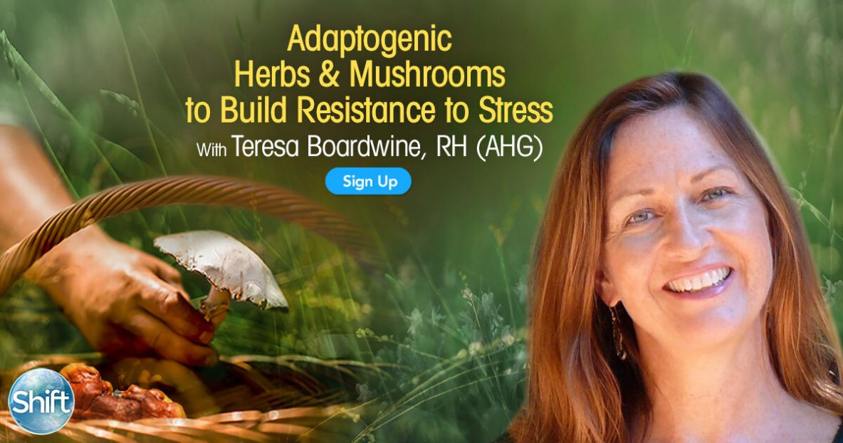 Adaptogenic Herbs & Mushrooms to Build Resistance to Stress with Teresa Boardwine